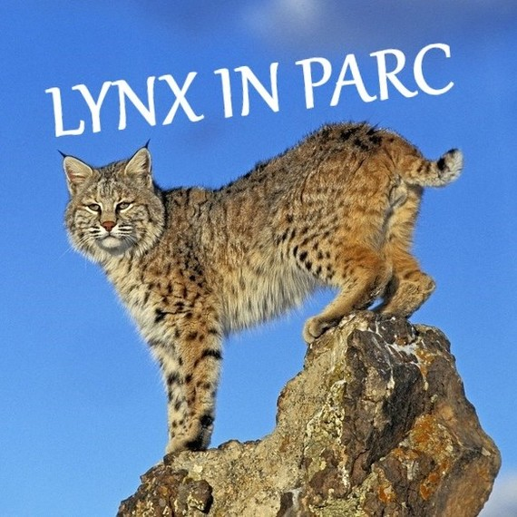 LYNX IN PARC