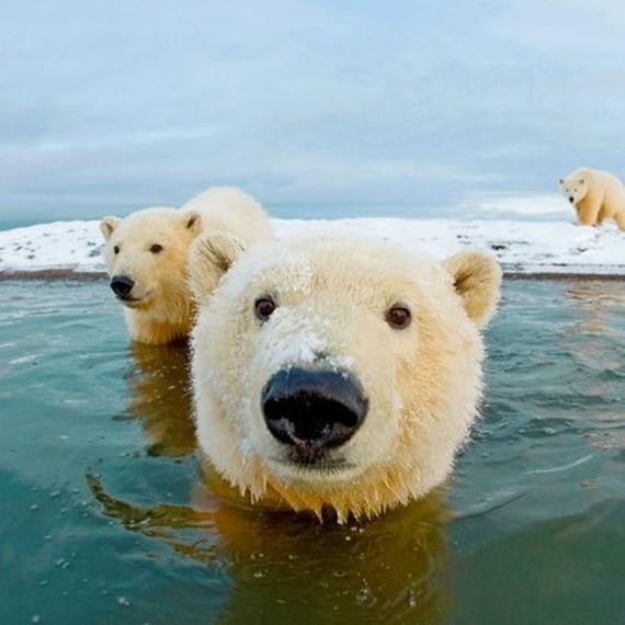 Collecte de fonds pour la WWF
