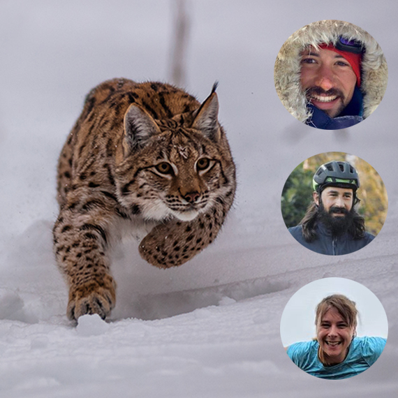 Les Lynxplorateurs