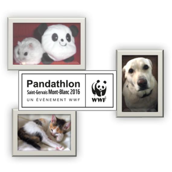 Les amis des Pandas