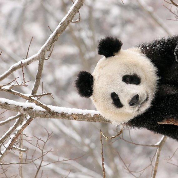 Les PandaPotes - équipe #2