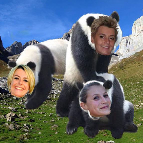 Les Pandas des montagnes